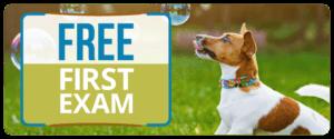 Free First Exam